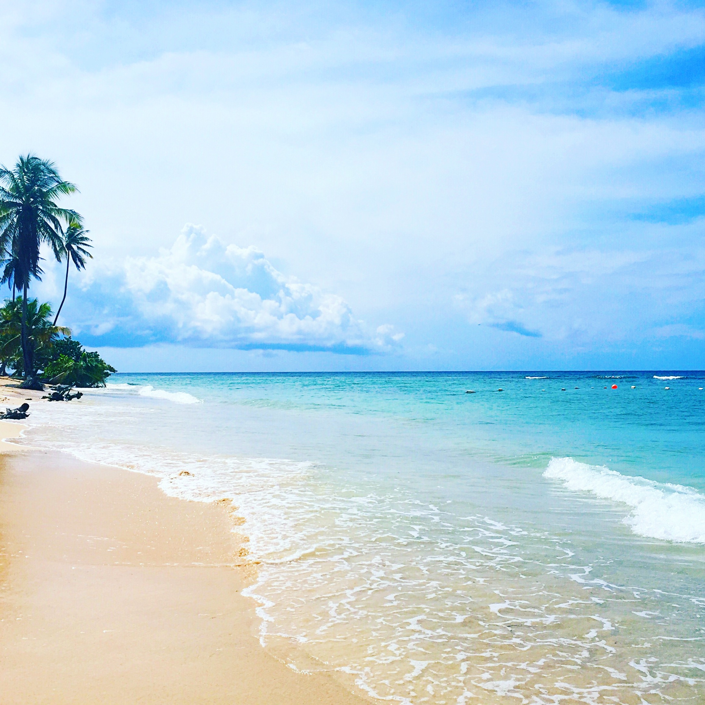 Tobago Island: Living With The Travel Bug